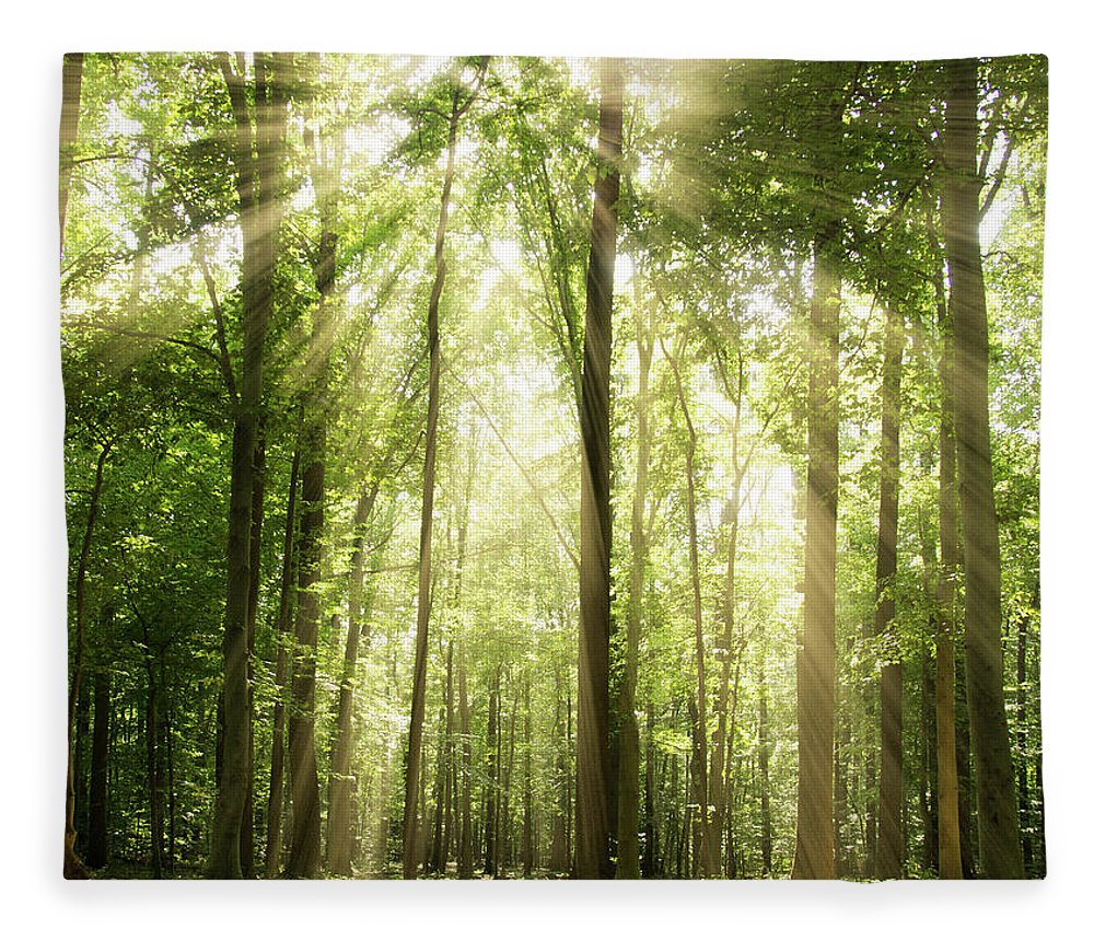 Tranquility Fleece Blanket featuring the photograph Sunrays Through Treetops by Melissa Fague