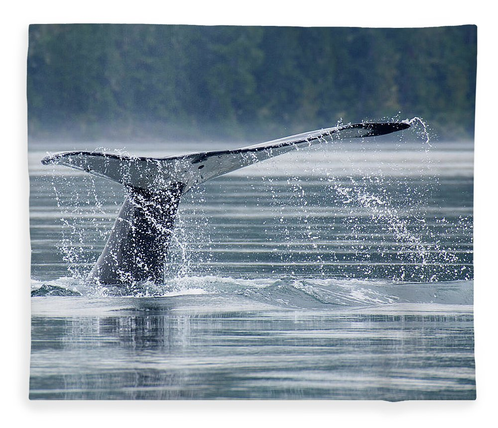 One Animal Fleece Blanket featuring the photograph Tail Of Humpback Whale by Grant Faint