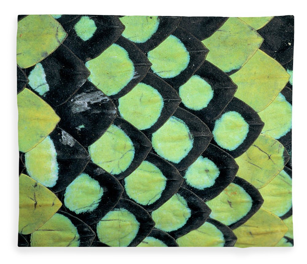 00511496 Fleece Blanket featuring the photograph Temple Pit Viper Trimeresurus Wagleri by Michael and Patricia Fogden
