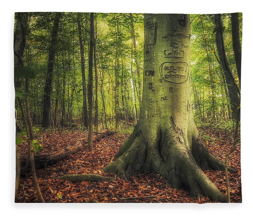 Tree Fleece Blanket featuring the photograph The Giving Tree by Scott Norris