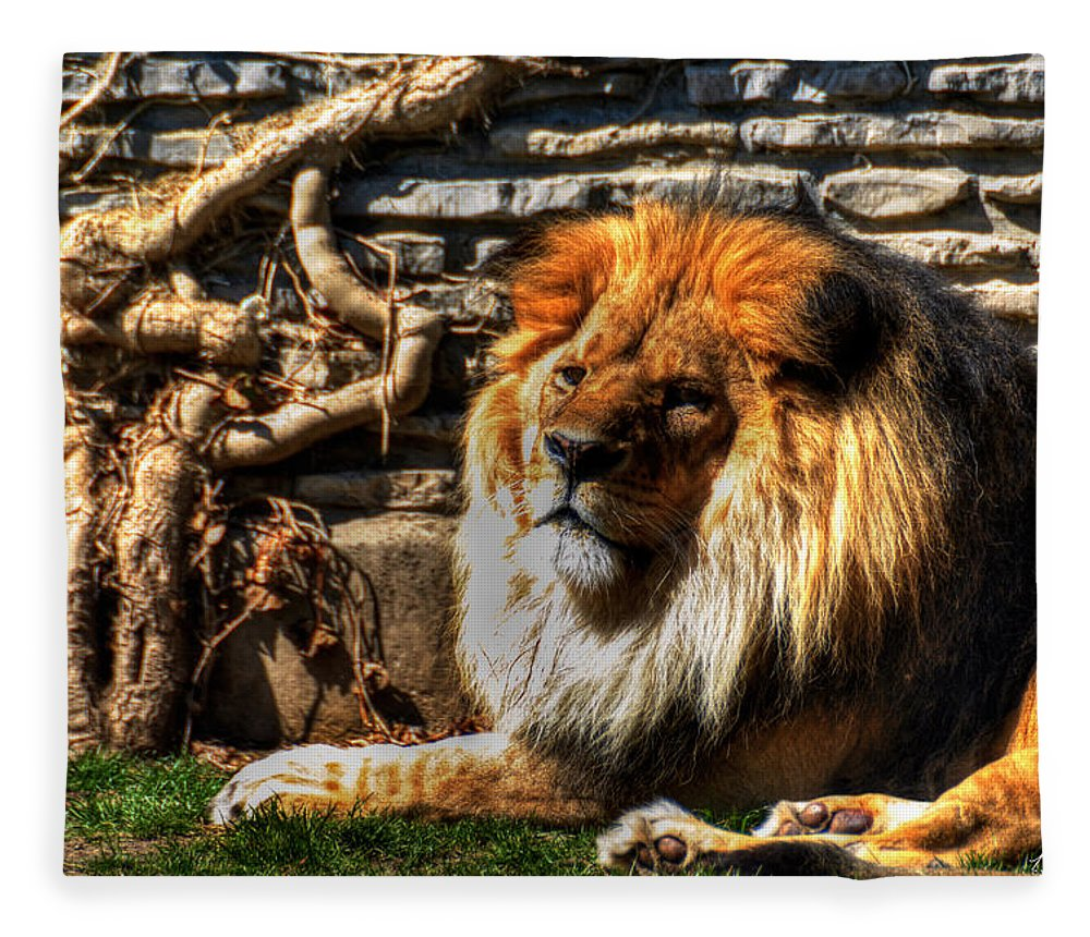 Lion Fleece Blanket featuring the photograph The King Lazy Boy At The Buffalo Zoo by Michael Frank Jr