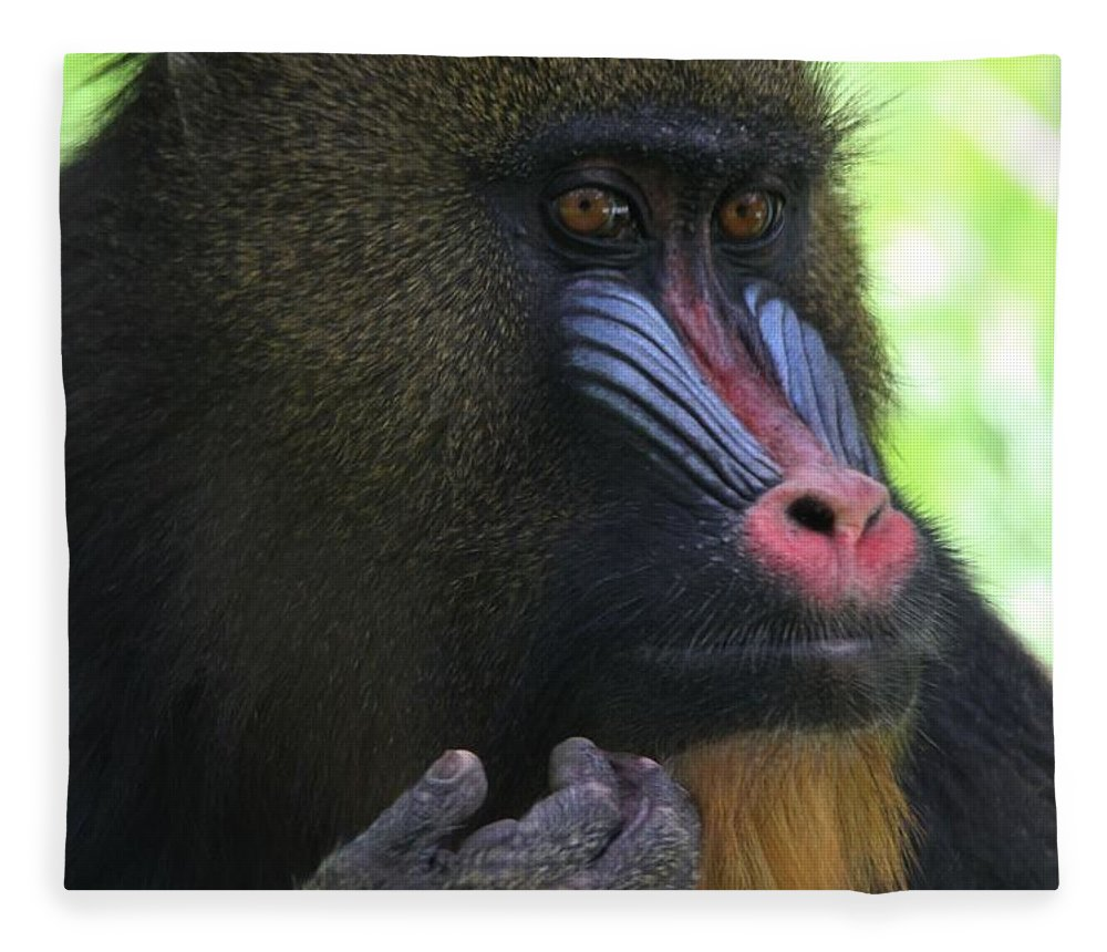 The Mandrill Fleece Blanket featuring the photograph The Mandrill by Dan Sproul