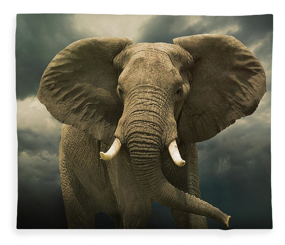 Kenya Fleece Blanket featuring the photograph Threatening African Elephant Under by Buena Vista Images