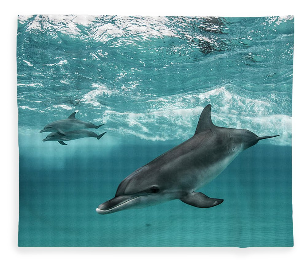 Tranquility Fleece Blanket featuring the photograph Three Atlantic Spotted Dolphins by Rodrigo Friscione