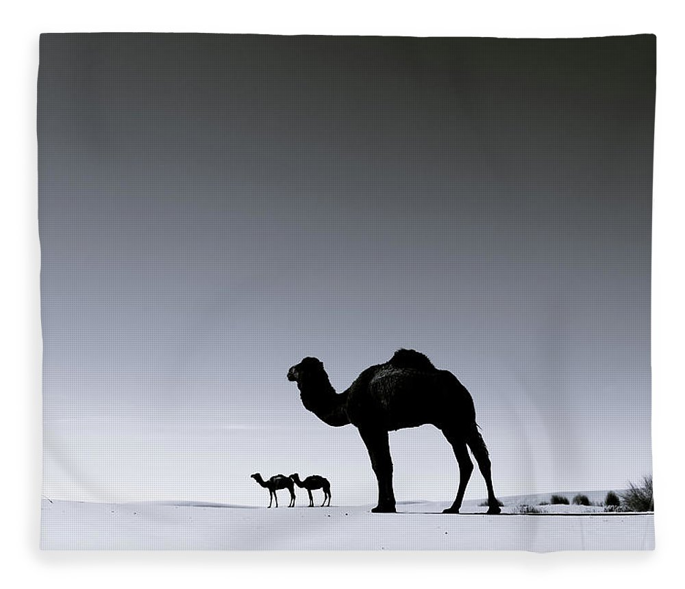 Scenics Fleece Blanket featuring the photograph Three Camels In The Sahara Desert by Zodebala