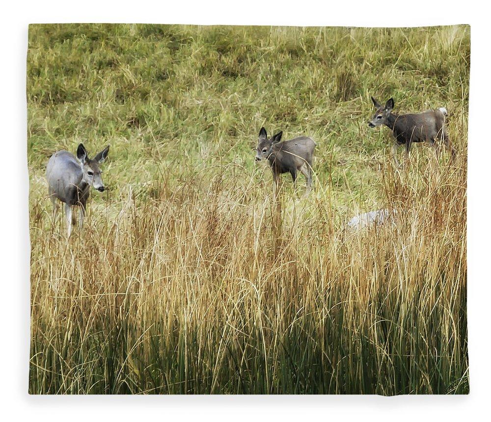 Deer Fleece Blanket featuring the photograph Three Deer by Belinda Greb