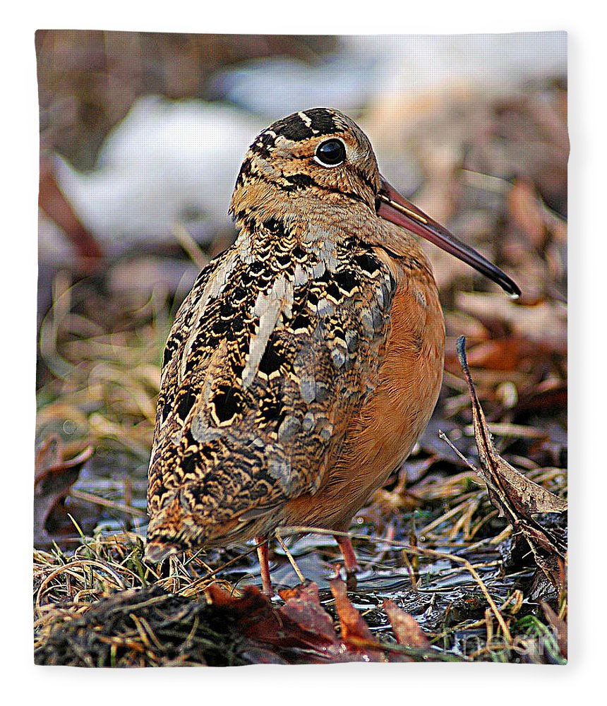 Woodcock Fleece Blanket featuring the photograph Timberdoodle The American Woodcock by Timothy Flanigan