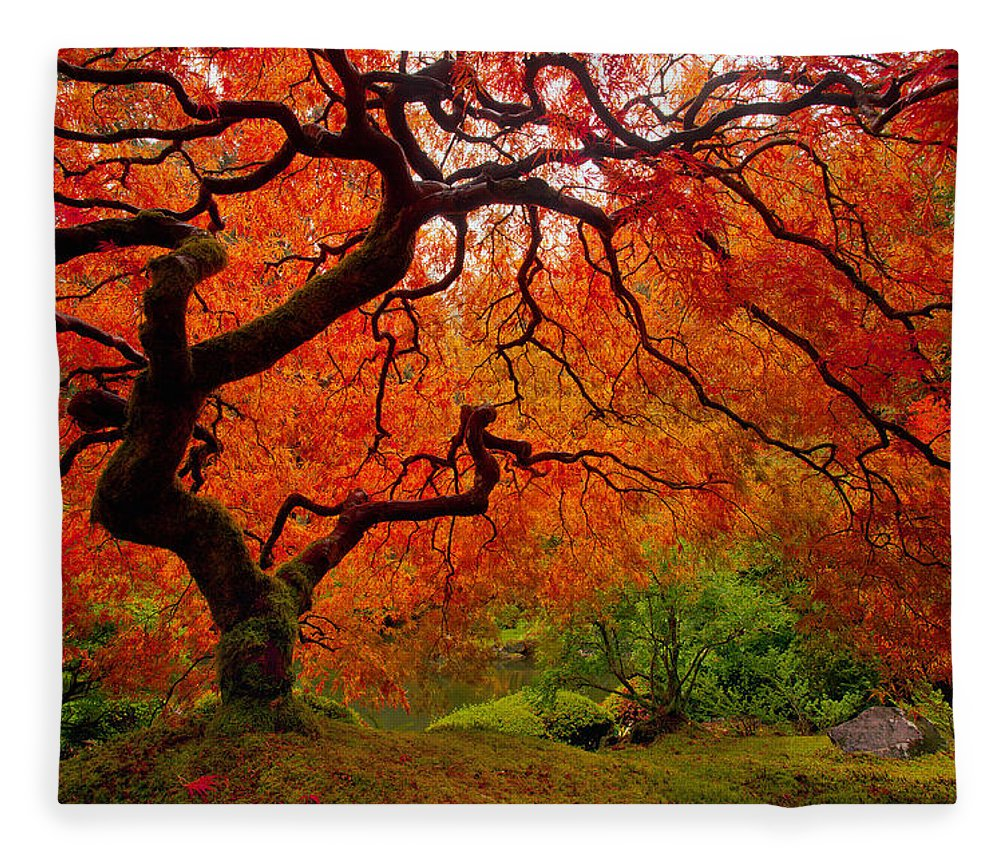 Portland Fleece Blanket featuring the photograph Tree Fire by Darren White
