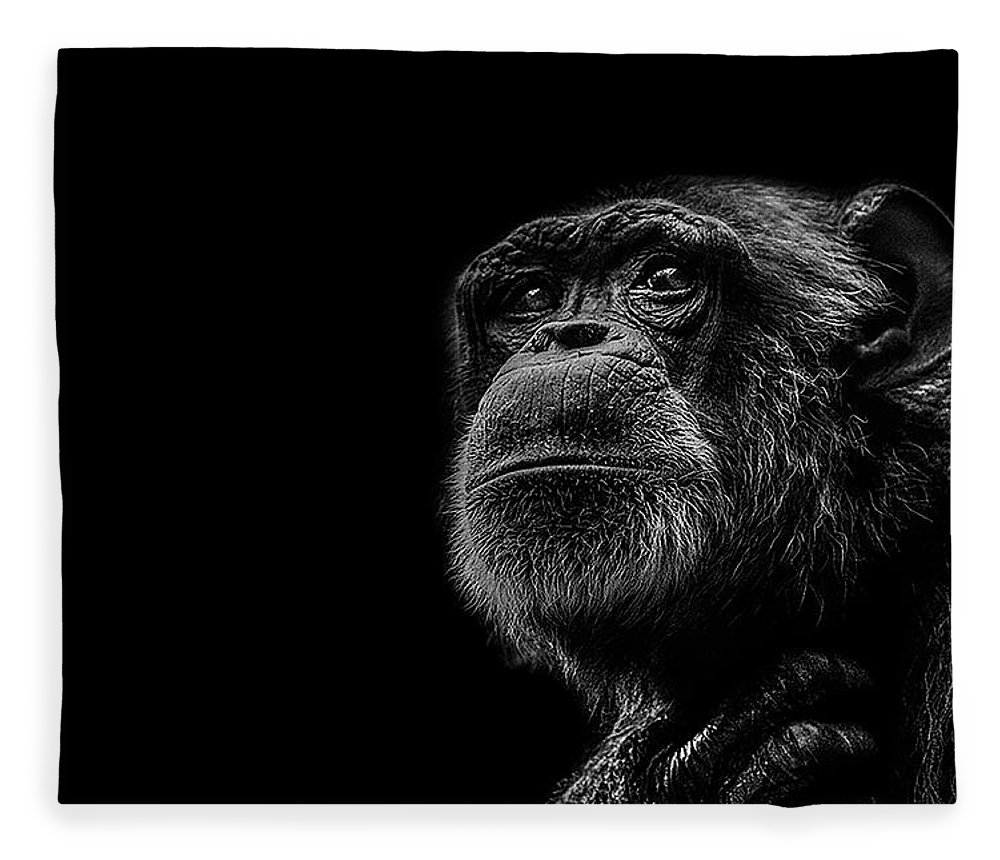 Chimpanzee Fleece Blanket featuring the photograph Trepidation by Paul Neville