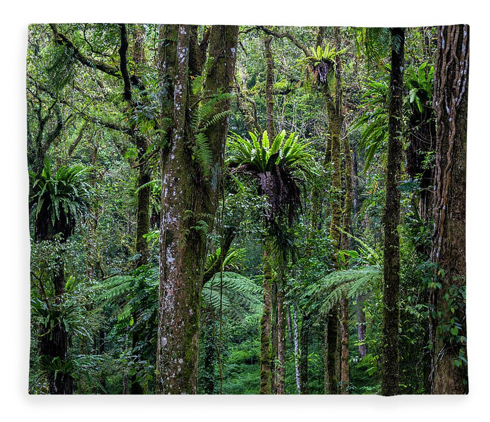 Tropical Rainforest Fleece Blanket featuring the photograph Tropical Rain Forest by Gavriel Jecan