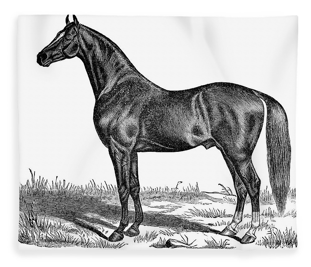 Horse Fleece Blanket featuring the digital art Trotting Horse Engraving by Nnehring