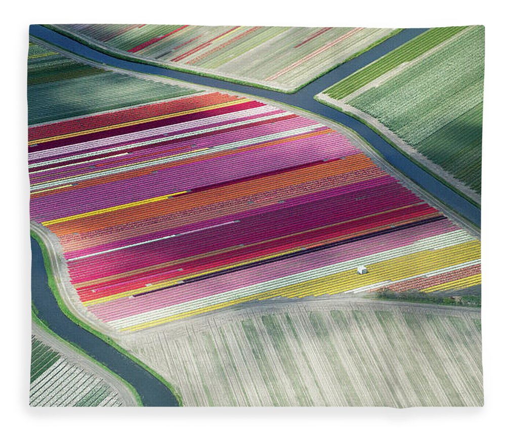 Curve Fleece Blanket featuring the photograph Tulip Fields, Aerial View, South by Frans Sellies