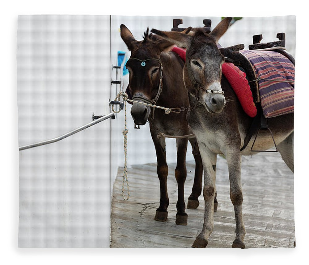 Working Animal Fleece Blanket featuring the photograph Two Donkeys Tethered In The Street In by Martin Child