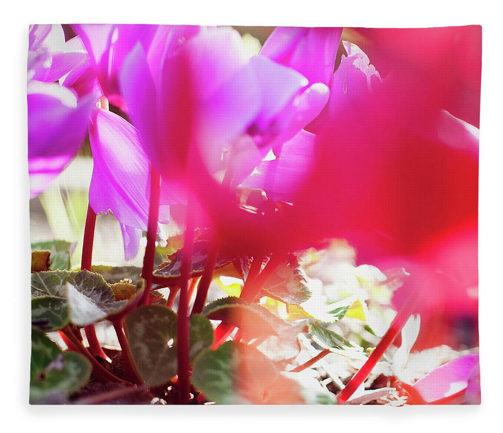 Shadow Fleece Blanket featuring the photograph Vibrant Magenta Cyclamen In Bloom by Erika Pino
