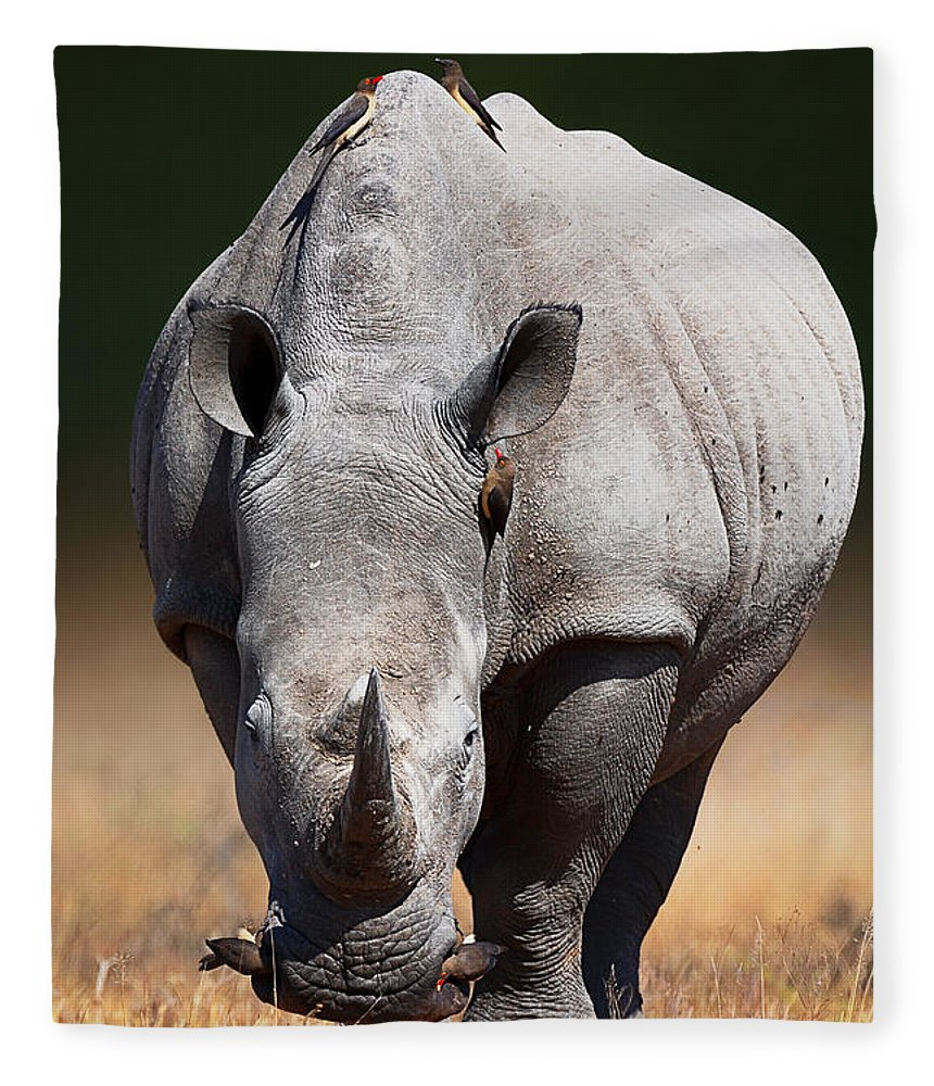 Rhinoceros Fleece Blanket featuring the photograph White Rhinoceros Front View by Johan Swanepoel