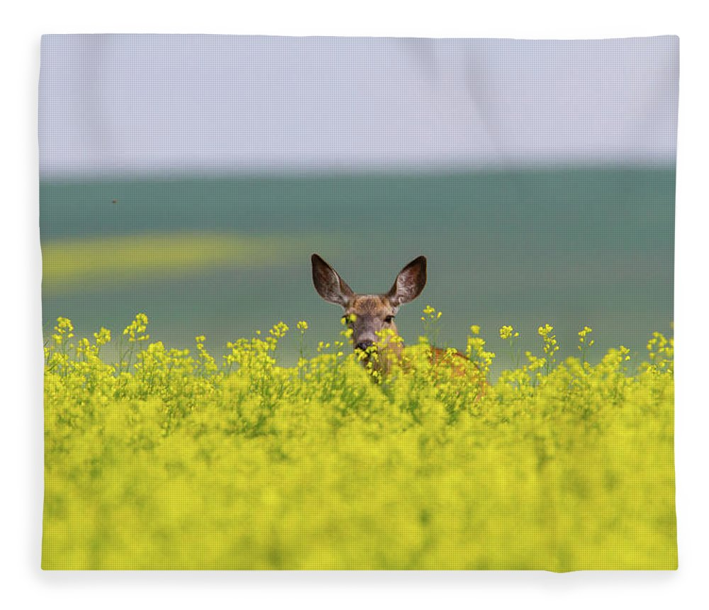 Alertness Fleece Blanket featuring the photograph White-tailed Doe by Ed Matuod