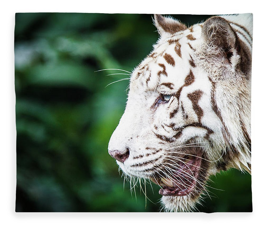 Snarling Fleece Blanket featuring the photograph White Tiger by Tony Kh Lim