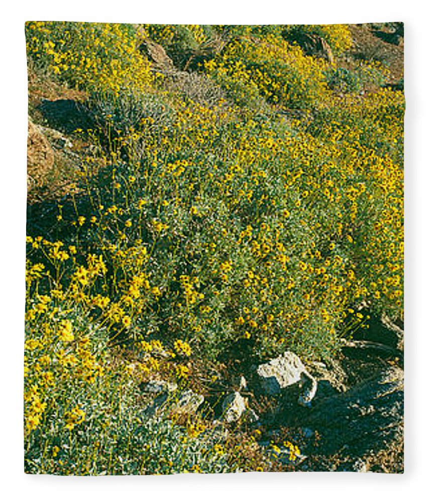 Photography Fleece Blanket featuring the photograph Wild Flowers, Anza Borrego Desert State by Panoramic Images