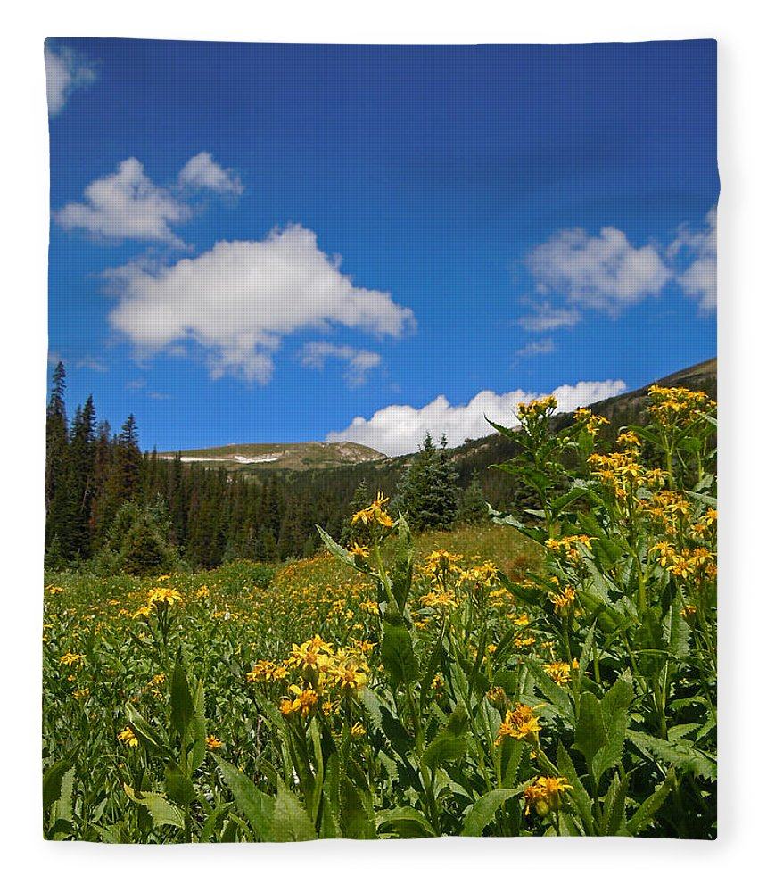 Rocky Mountain Plein Air Fleece Blanket featuring the photograph Wild Flowers In Rocky Mountain National Park by Heather Coen