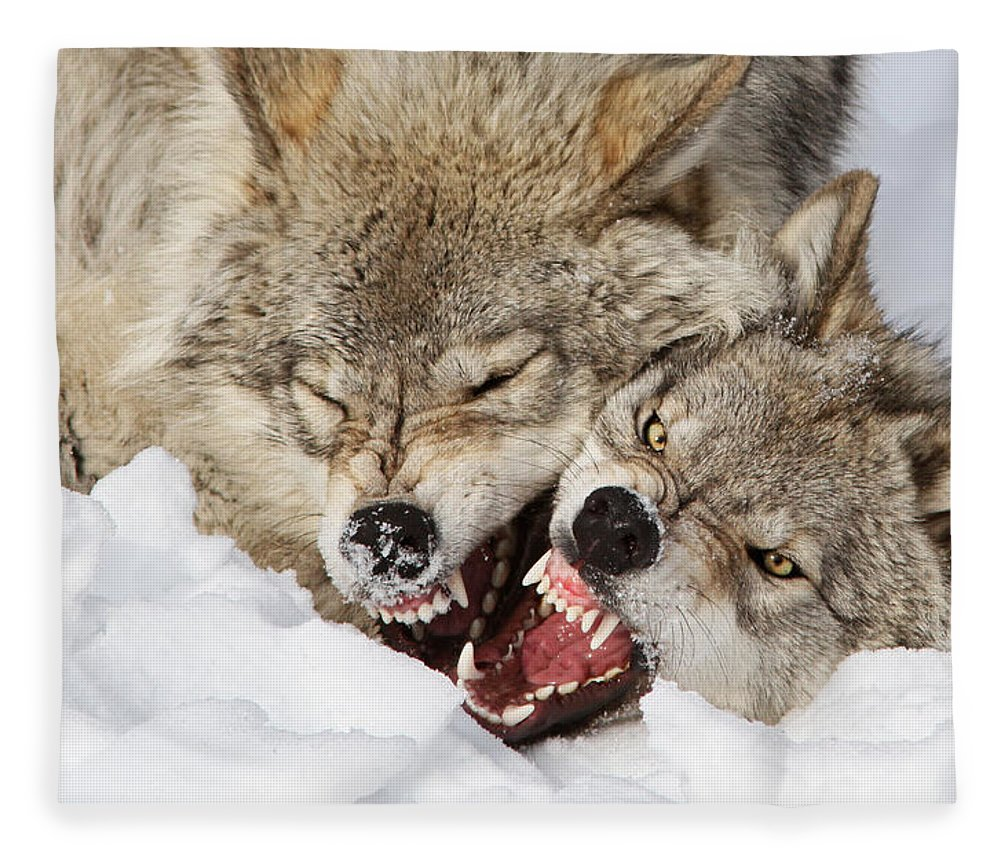 Wolf Fleece Blanket featuring the photograph Wolves Rules by Mircea Costina Photography