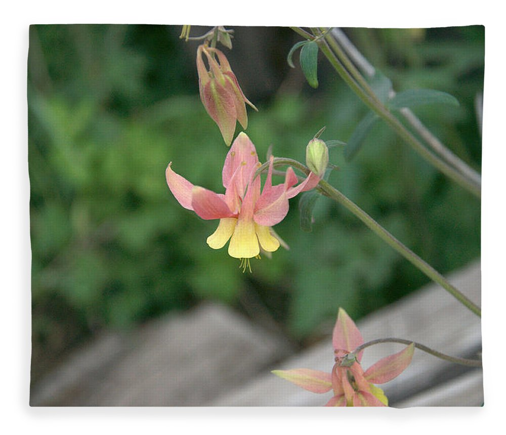 Yellow Fleece Blanket featuring the photograph Yellow Columbine 2 by Frank Madia