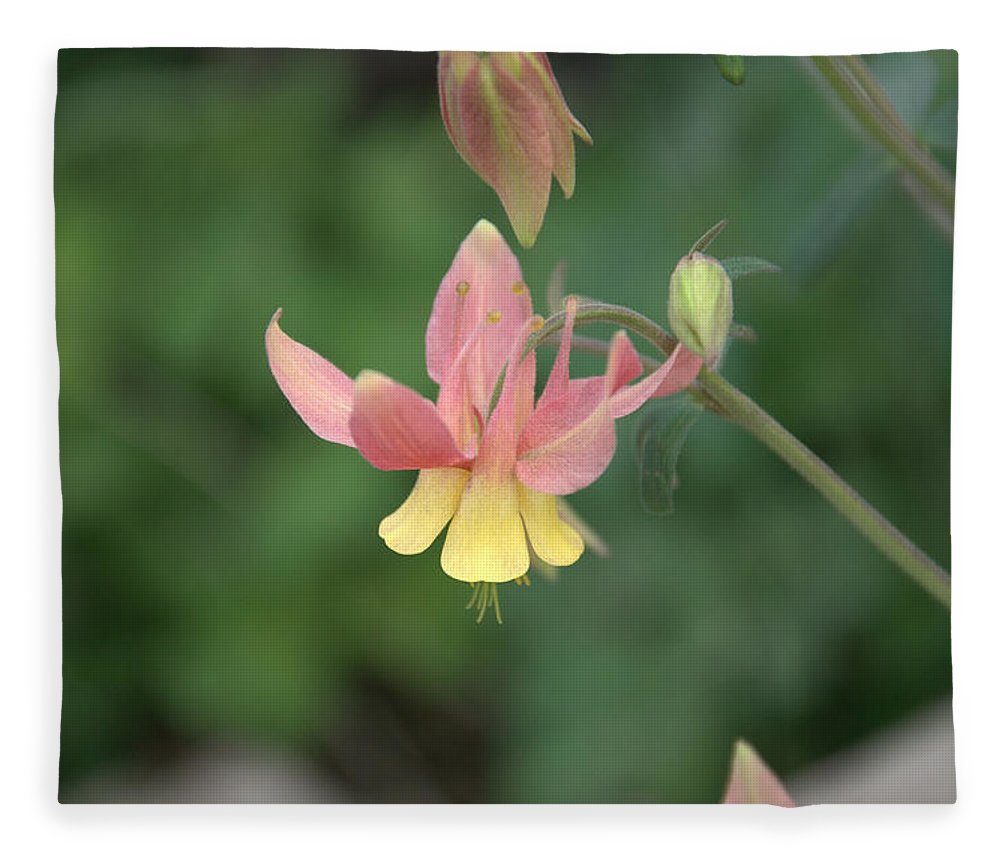 Flower Fleece Blanket featuring the photograph Yellow Columbine by Frank Madia