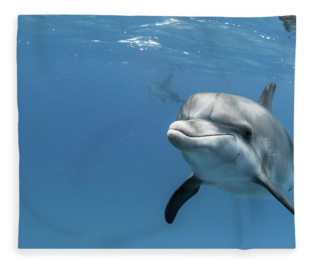 Underwater Fleece Blanket featuring the photograph Young Atlantic Spotted Dolpin by Kerstin Meyer