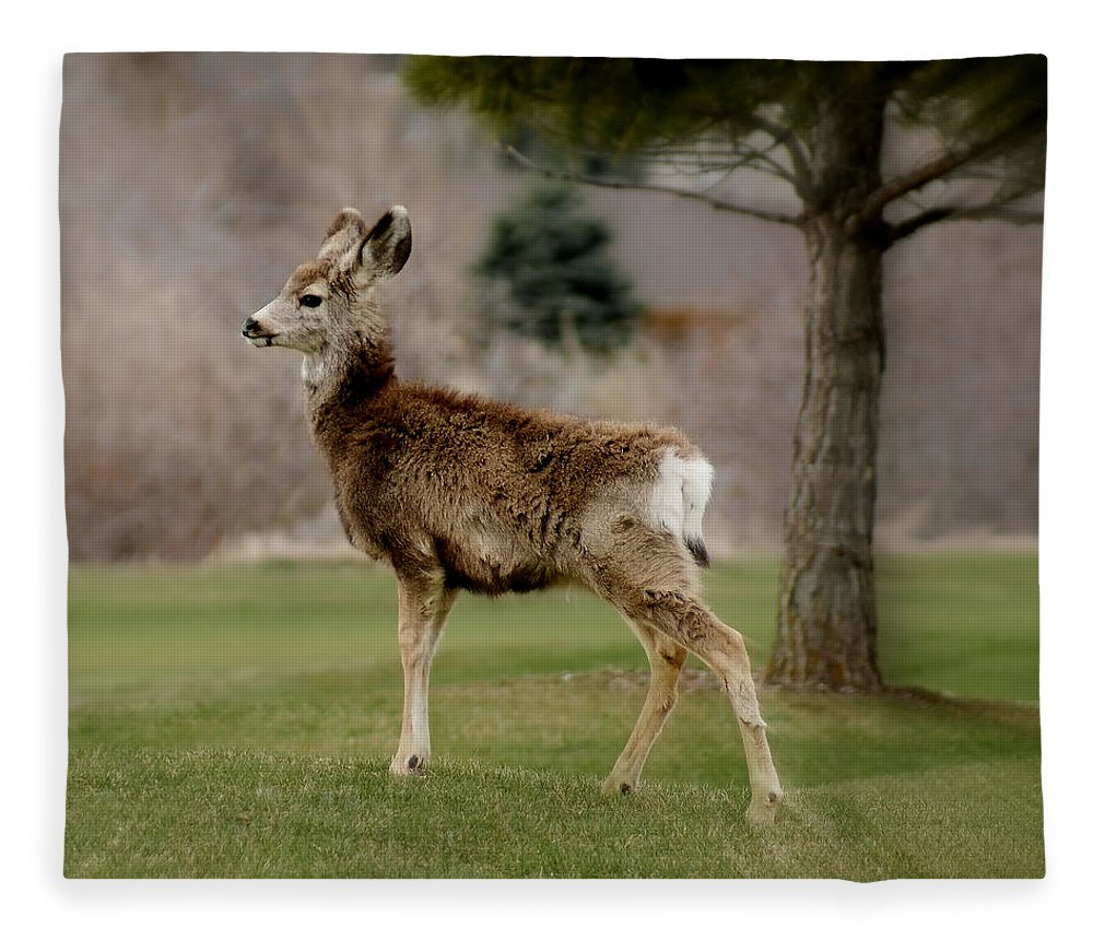 Big Ears Fleece Blanket featuring the photograph Young Mule Deer by Ernie Echols