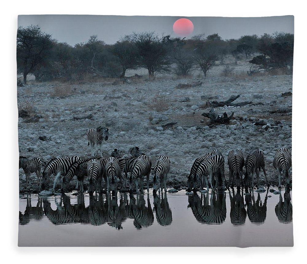 Scenics Fleece Blanket featuring the photograph Zebra Drinking Water At Sunset, Etosha by John Wang