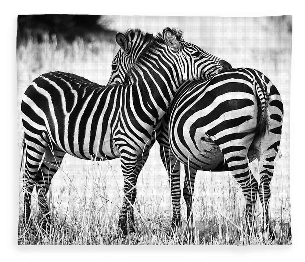3scape Fleece Blanket featuring the photograph Zebra Love by Adam Romanowicz