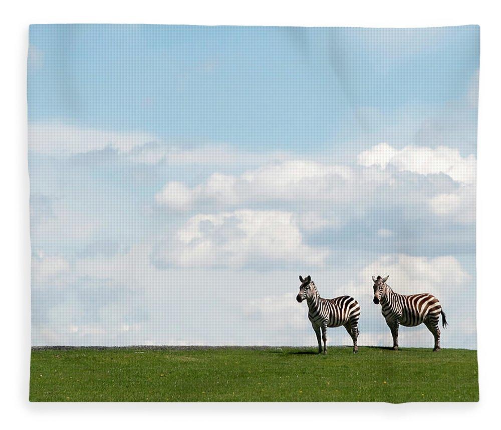 Grass Fleece Blanket featuring the photograph Zebra Partners by Gail Shotlander