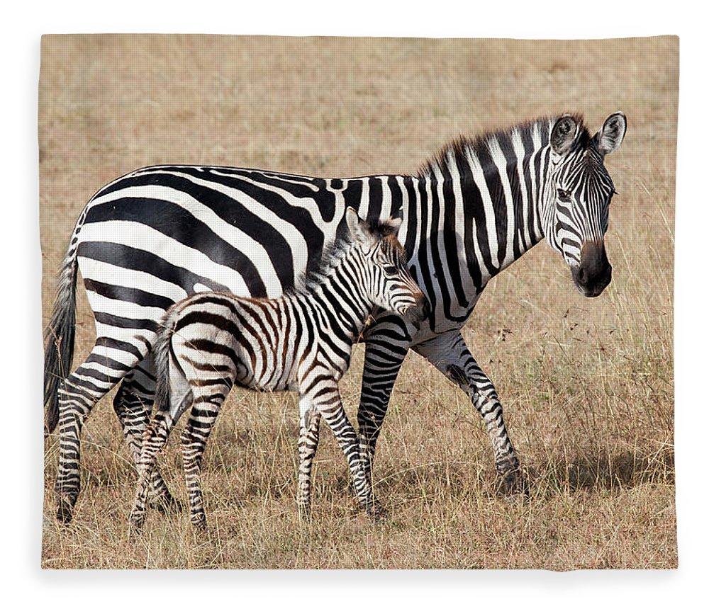 Kenya Fleece Blanket featuring the photograph Zebra With Young Foal, Masai Mara by Angelika