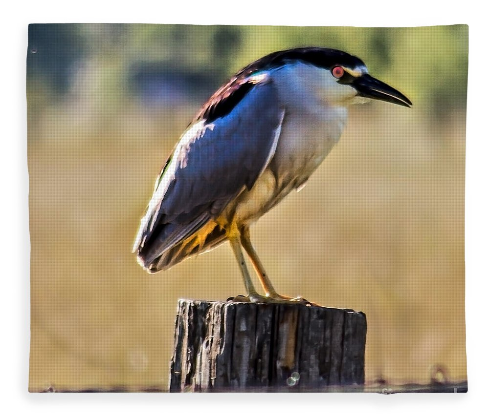Birds Fleece Blanket featuring the photograph Black-crowned Night Heron by Robert Bales