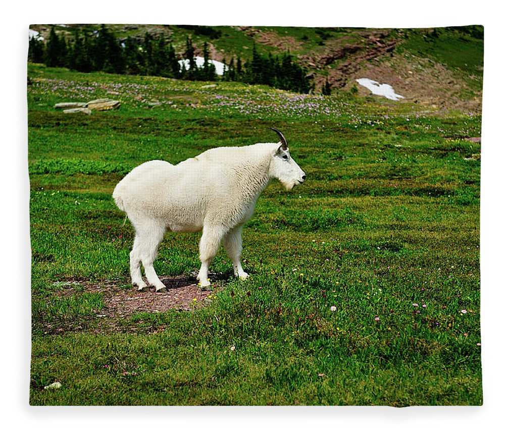 Glacier National Park Fleece Blanket featuring the photograph Mountain Goat by Greg Norrell