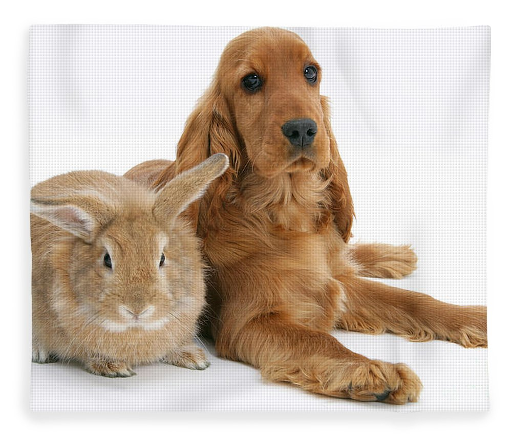 Animal Fleece Blanket featuring the photograph Cocker Spaniel And Rabbit by Mark Taylor