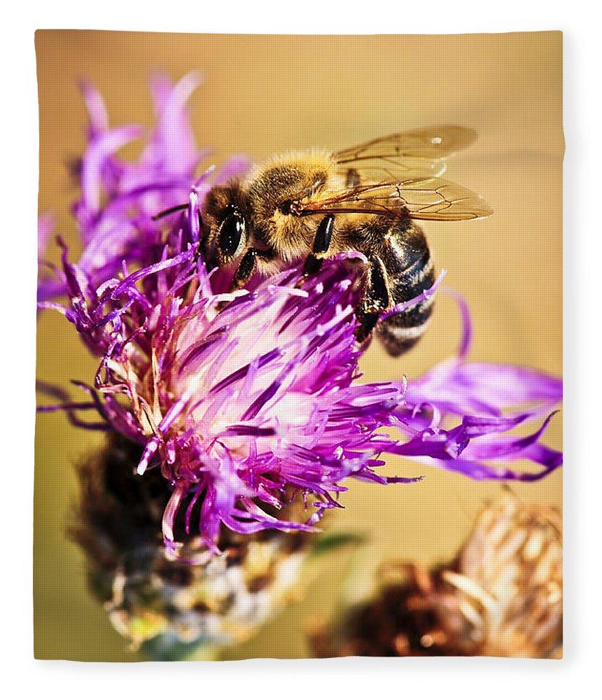 Honey Fleece Blanket featuring the photograph Honey bee by Elena Elisseeva