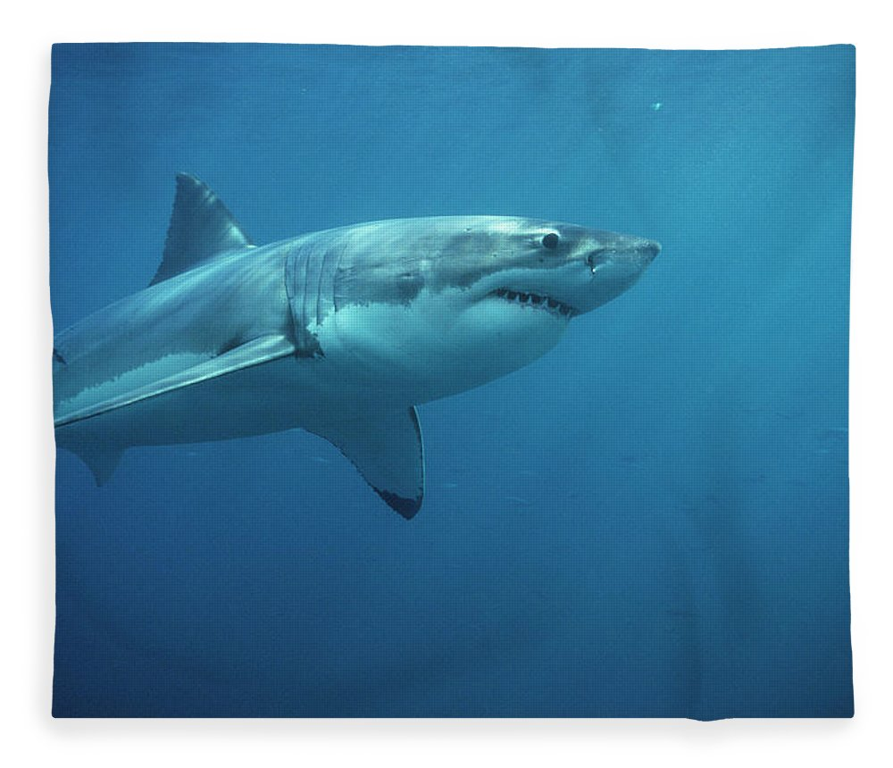 Mp Fleece Blanket featuring the photograph Great White Shark Carcharodon by Mike Parry