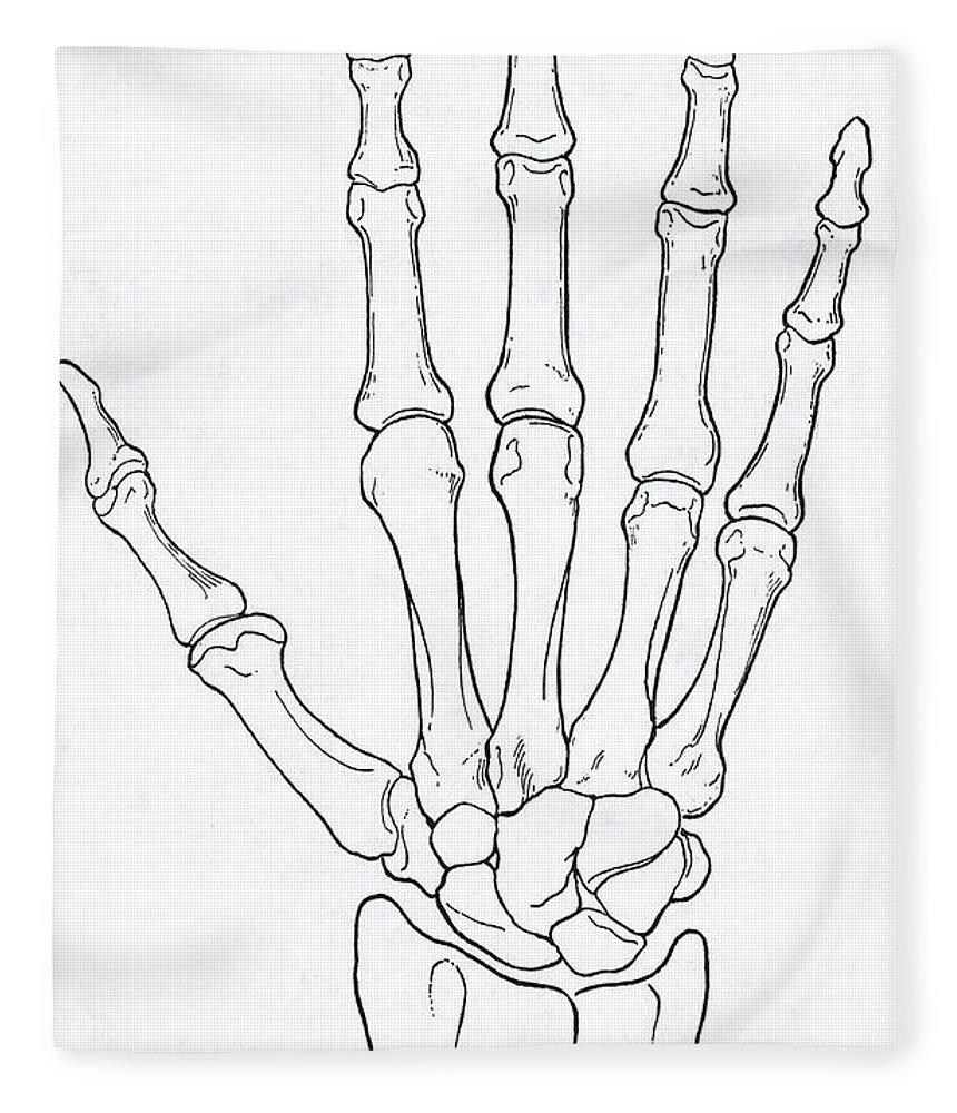 Hand And Wrist Bones Fleece Blanket For Sale By Science Source