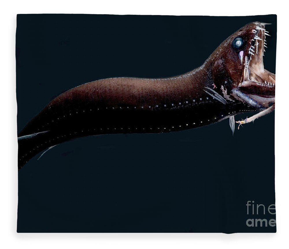 Dragonfish Fleece Blanket featuring the photograph Deep-sea Dragonfish by Dante Fenolio