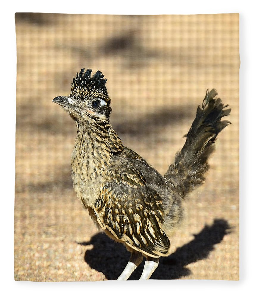 Greater Roadrunner Fleece Blanket Featuring The Photograph A Baby By Saija Lehtonen