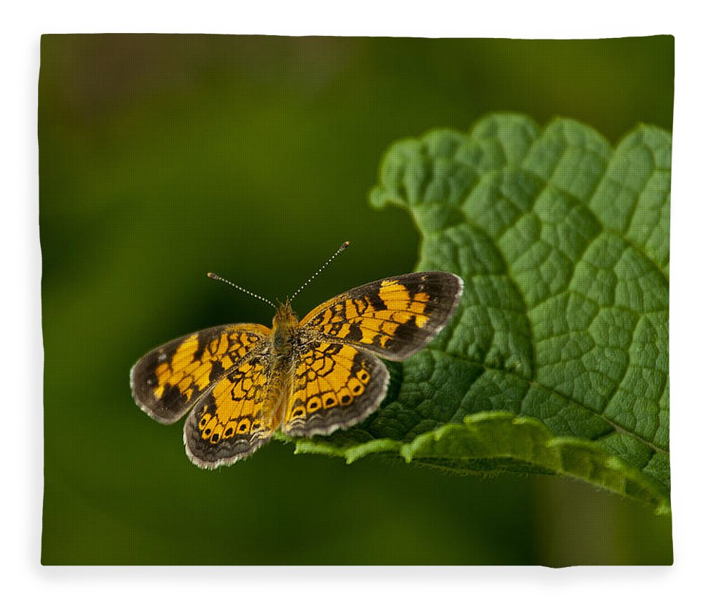 Butterfly Fleece Blanket featuring the photograph A Brief Moment Of Rest by Dale Kincaid