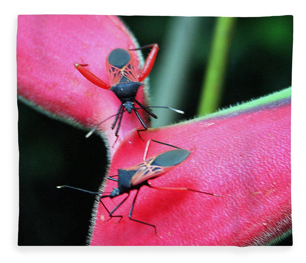 Assassin Bug Fleece Blanket featuring the photograph Assassin Bug Matchup by Laurel Talabere