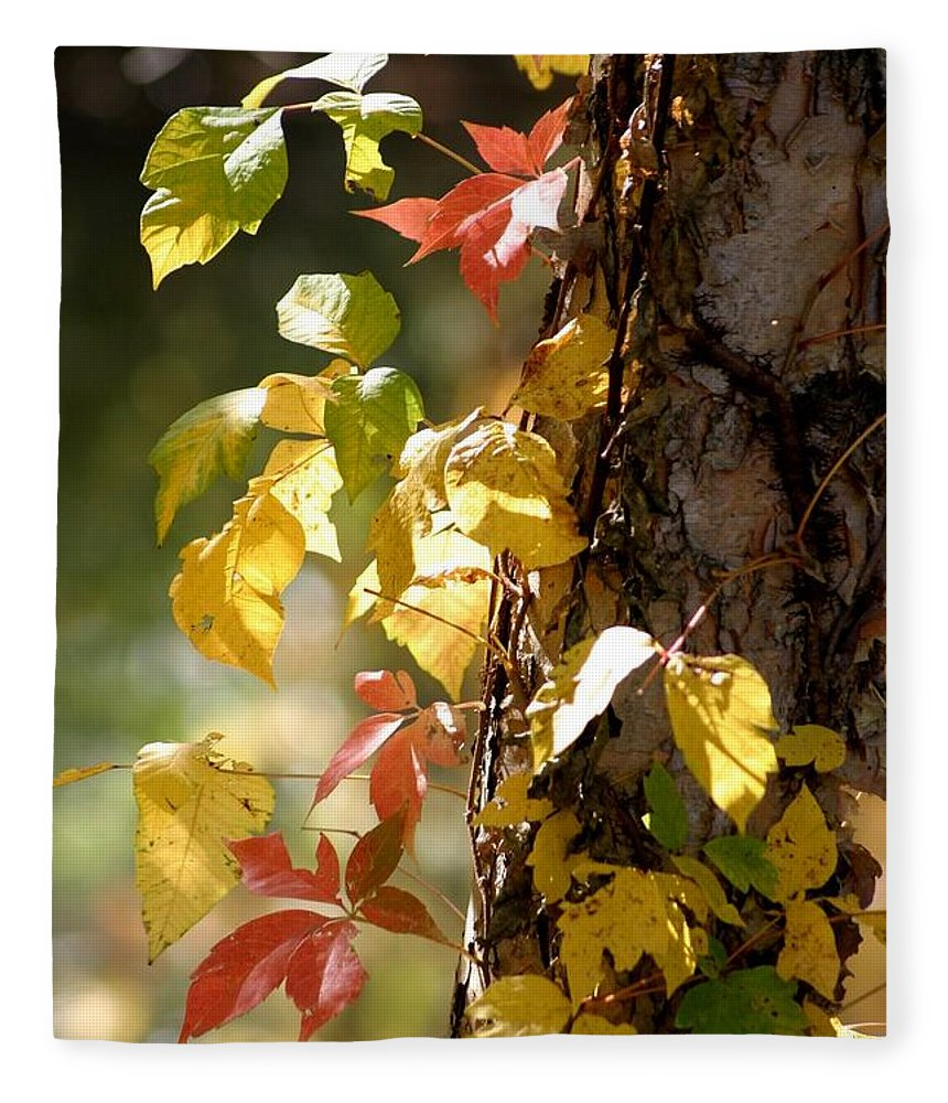 Autumn Fleece Blanket featuring the photograph Autumn Colors by Living Color Photography Lorraine Lynch