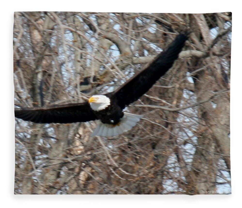 Bald Eagle Fleece Blanket featuring the photograph Bald Eagle At Full Wingspan by Crystal Heitzman Renskers