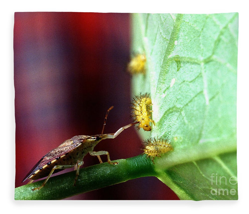 Mexican Bean Beetle Fleece Blanket featuring the photograph Biocontrol Of Bean Beetle by Science Source