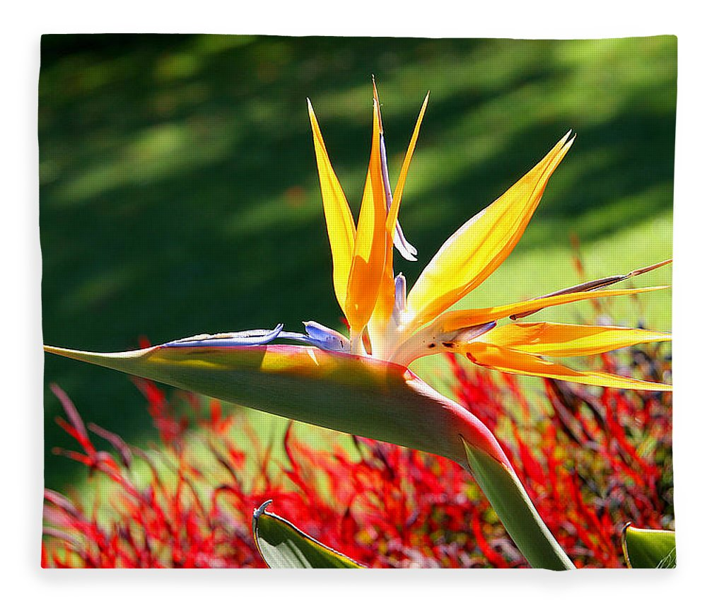 Flower Fleece Blanket featuring the photograph Bird Of Paradise by Diana Haronis