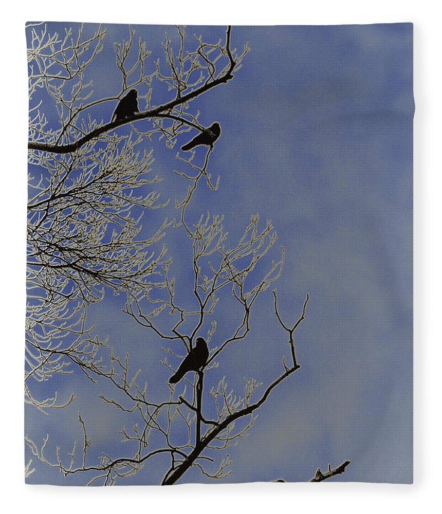 Blackbird Fleece Blanket featuring the photograph Blackbirds by Bill Cannon