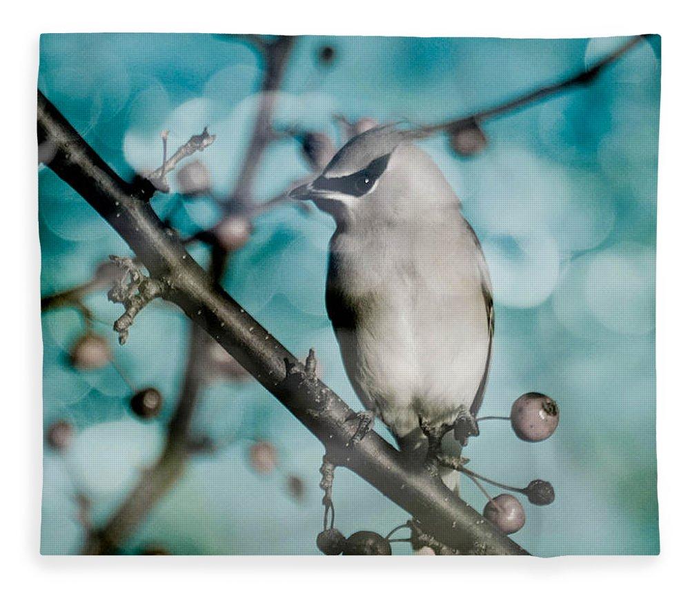 Bird Fleece Blanket featuring the photograph Catch The Bandit by Trish Tritz