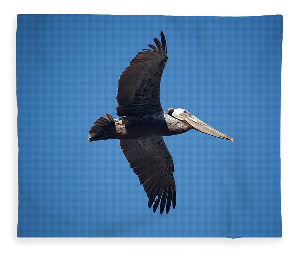 Pelican Fleece Blanket featuring the photograph flying Pelican by Ralf Kaiser