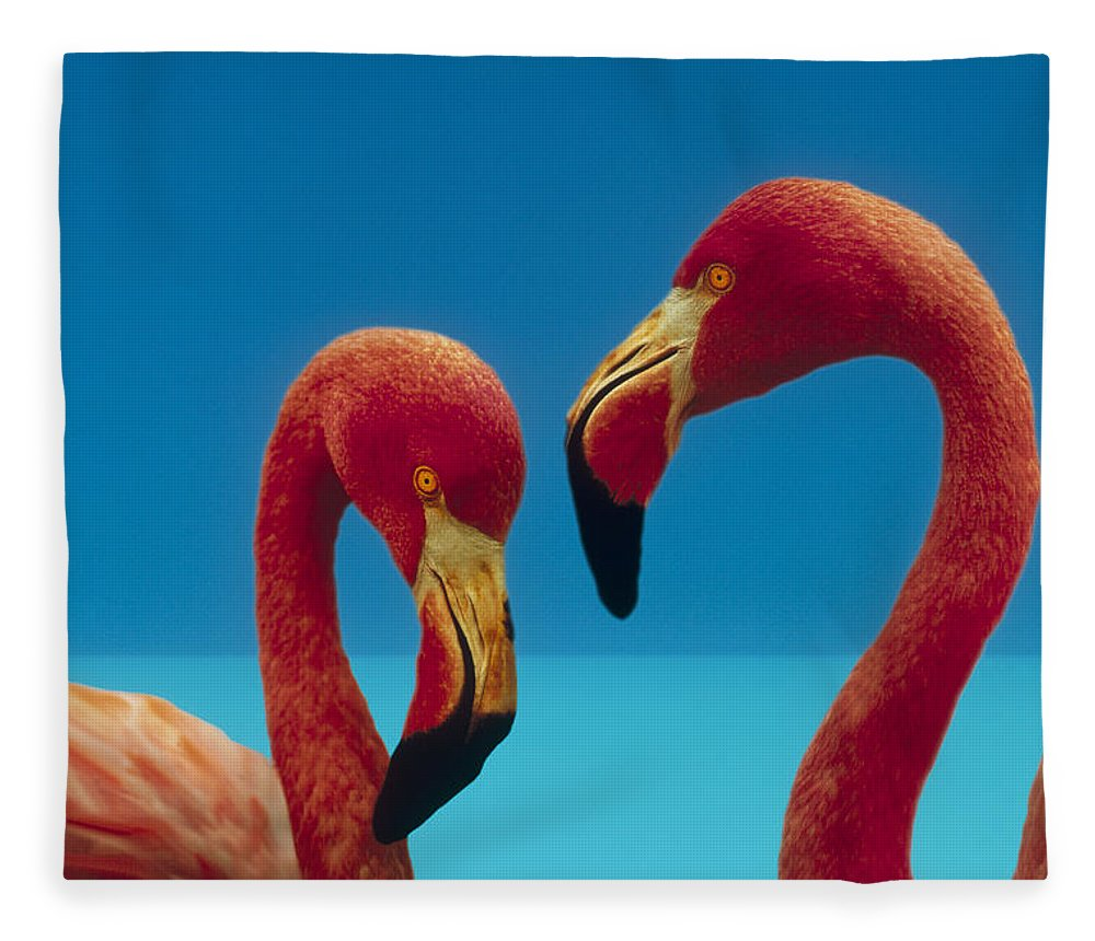 00172310 Fleece Blanket featuring the photograph Greater Flamingo Courting Pair by Tim Fitzharris